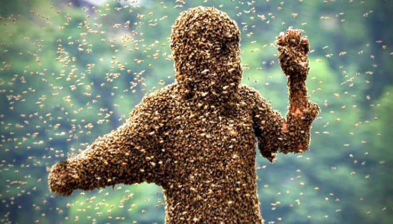man covered in bees in spring
