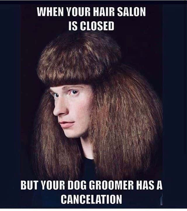 """""""When your hair salon is closed for business but your dog groomer has a cancellation"""" with picture of man with poodle cut hair"""