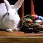cadbury easter bunny with basket of creme eggs